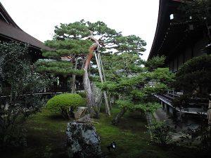 daikakuji2